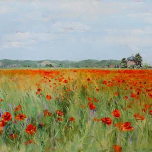 Bild Poppy field
